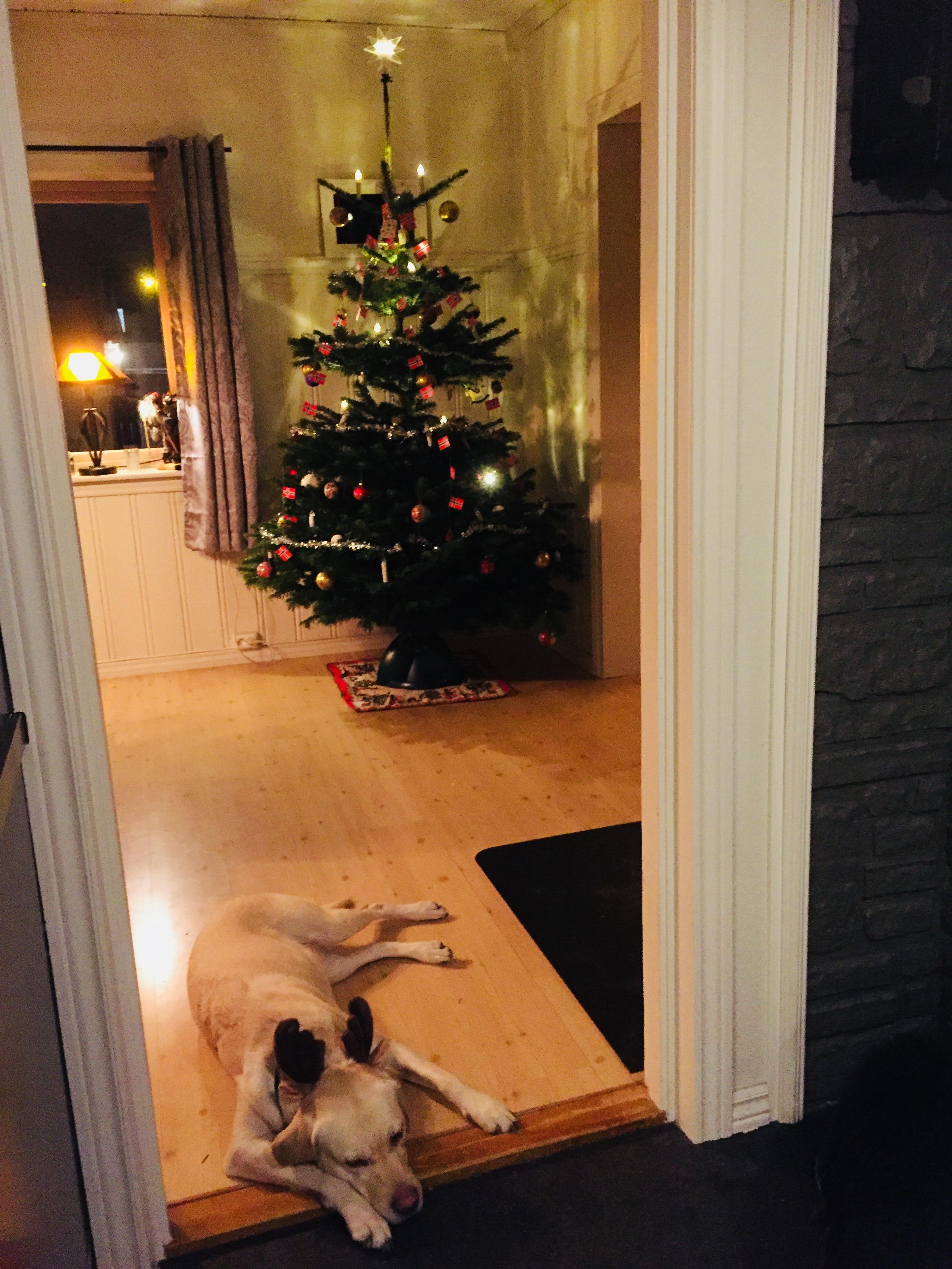 Rudolph er trøtt
