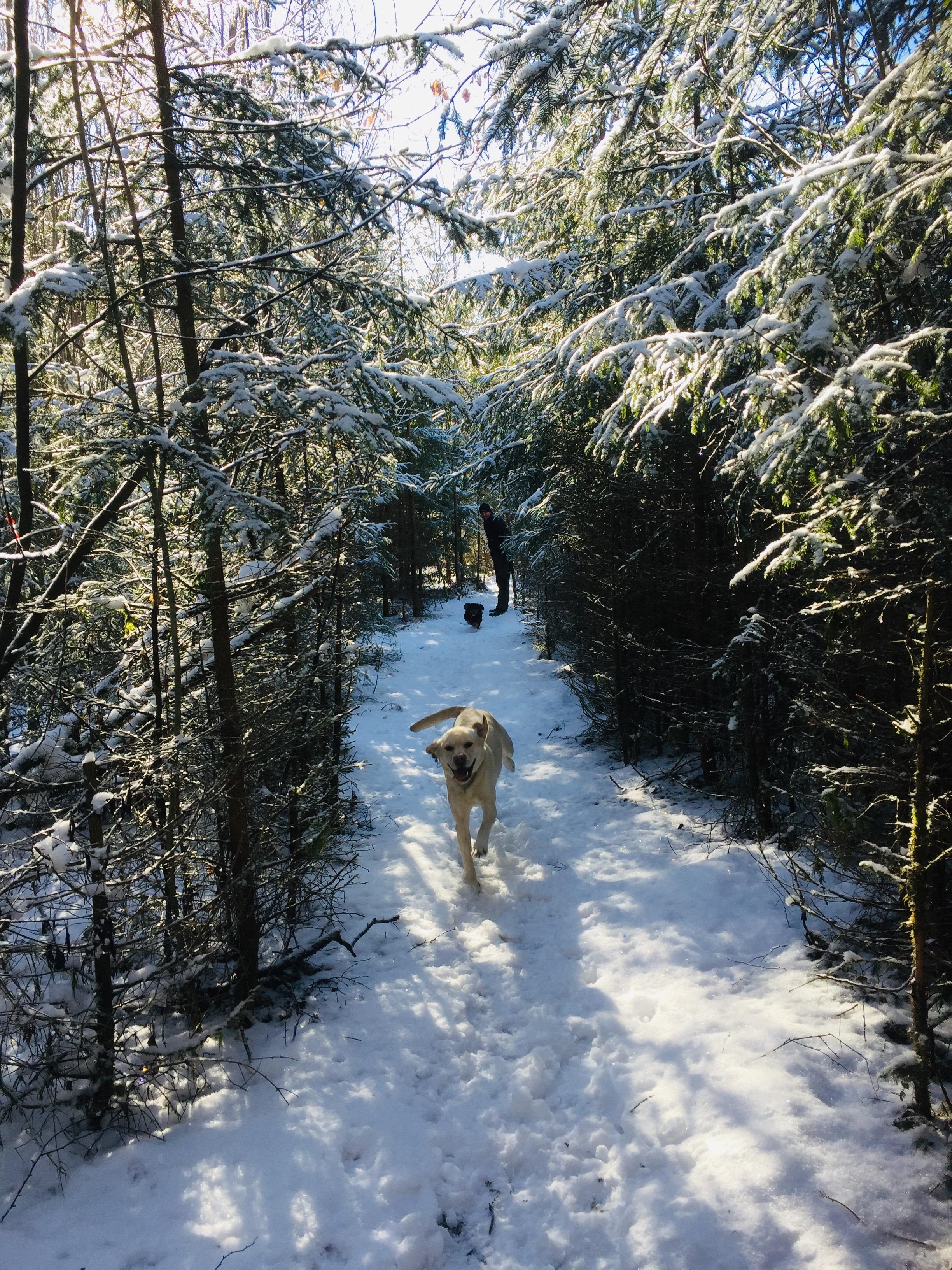 Vinter in Norge